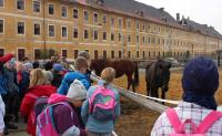Žáci školy sbírali kaštany pro lesní zvířata